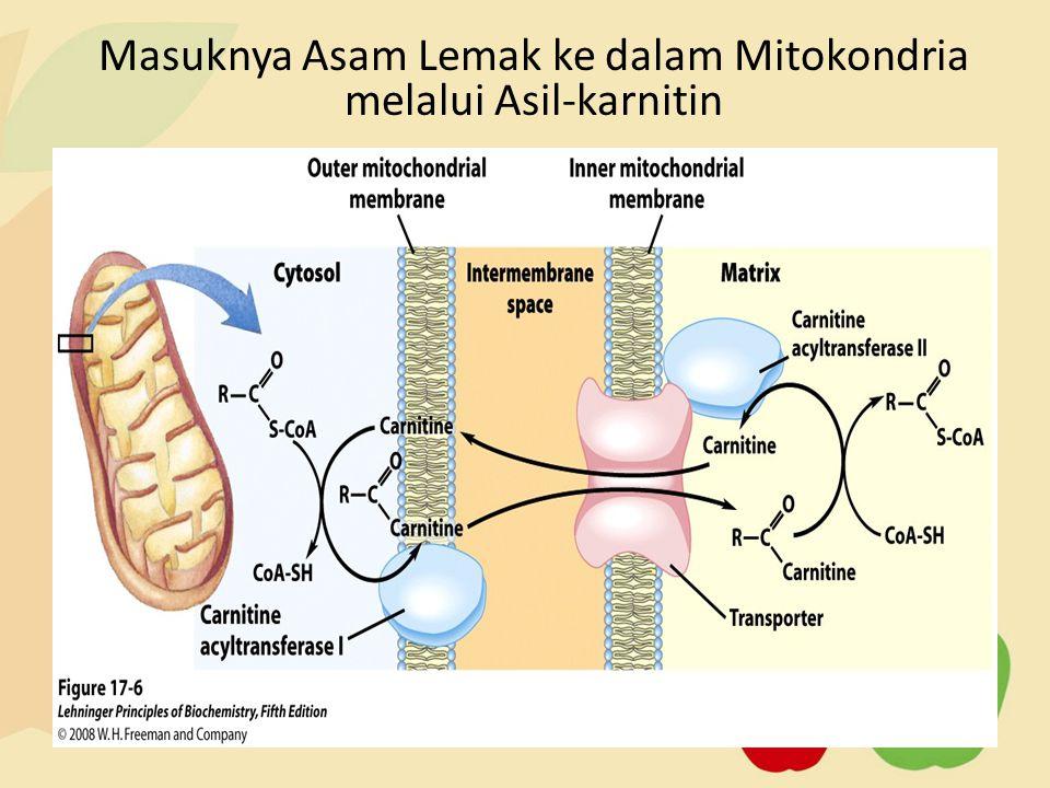 Masuknya Asam Lemak ke dalam Mitokondria melalui Asil-karnitin