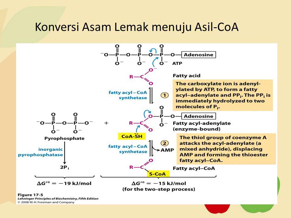 Konversi Asam Lemak menuju Asil-CoA