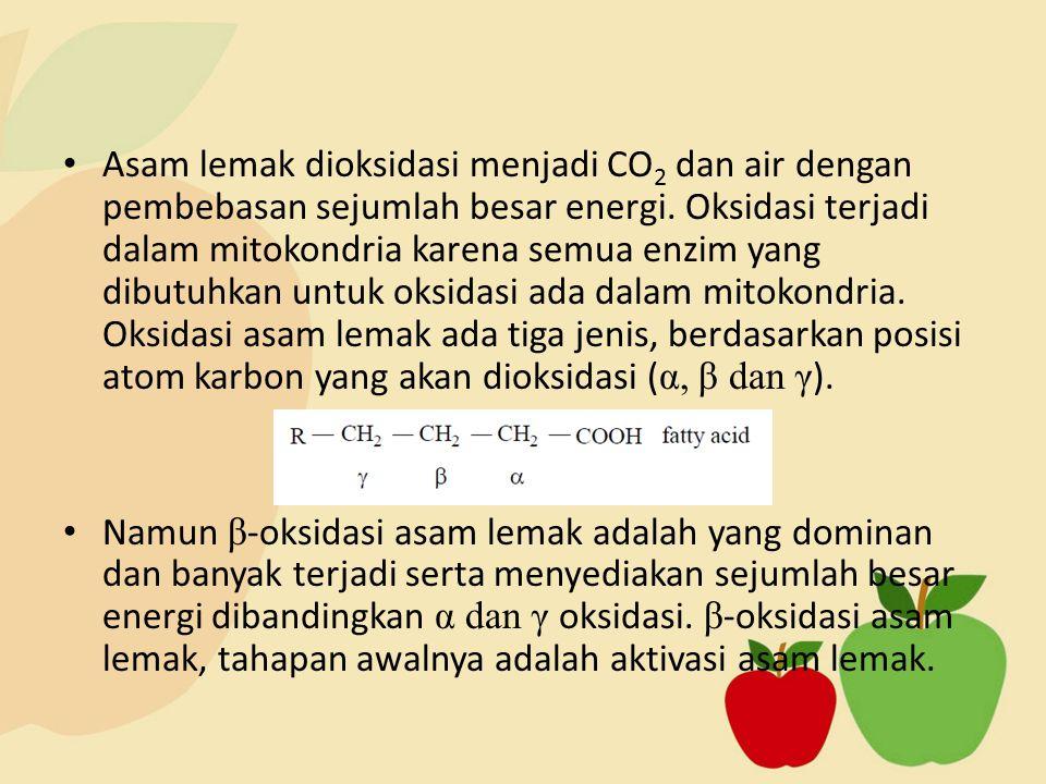Asam lemak dioksidasi menjadi CO2 dan air dengan pembebasan sejumlah besar energi. Oksidasi terjadi dalam mitokondria karena semua enzim yang dibutuhkan untuk oksidasi ada dalam mitokondria. Oksidasi asam lemak ada tiga jenis, berdasarkan posisi atom karbon yang akan dioksidasi (α, β dan γ).