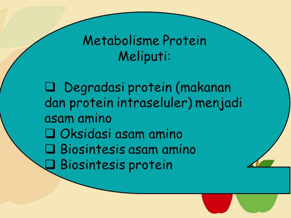 Metabolisme Protein Meliputi: Degradasi protein (makanan dan protein intraseluler) menjadi asam amino.