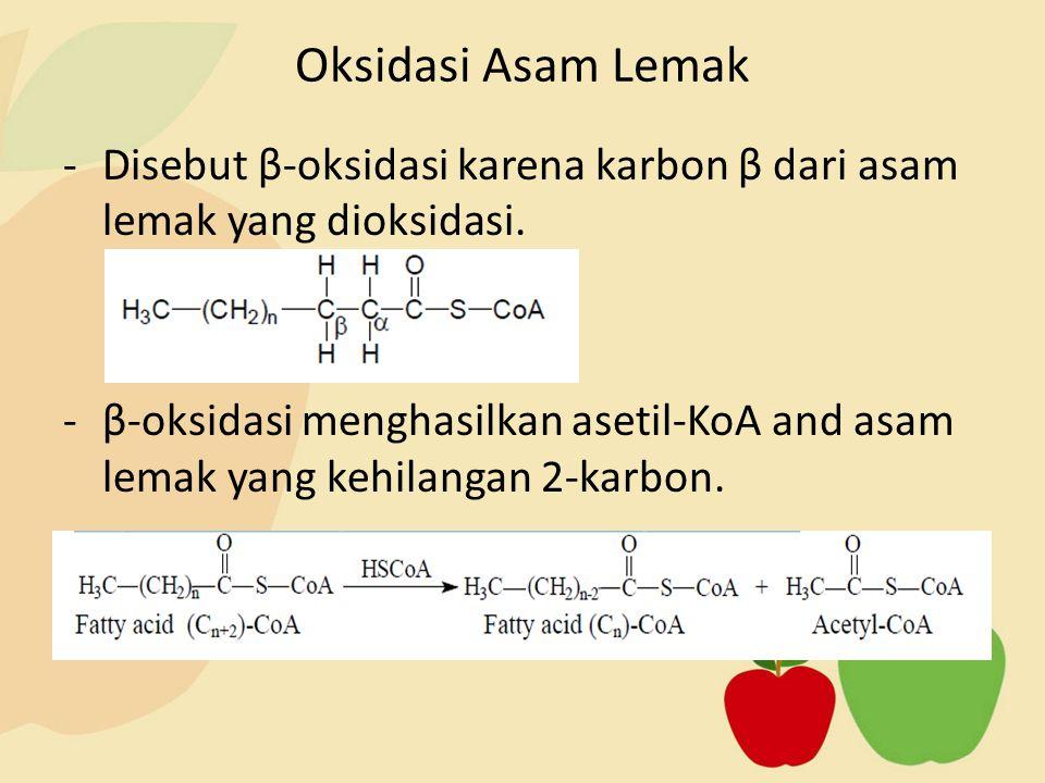 Oksidasi Asam Lemak Disebut β-oksidasi karena karbon β dari asam lemak yang dioksidasi.