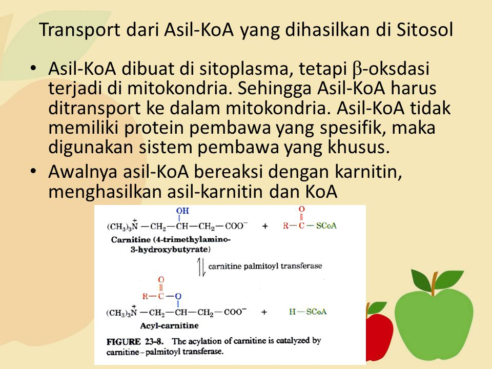 Transport dari Asil-KoA yang dihasilkan di Sitosol