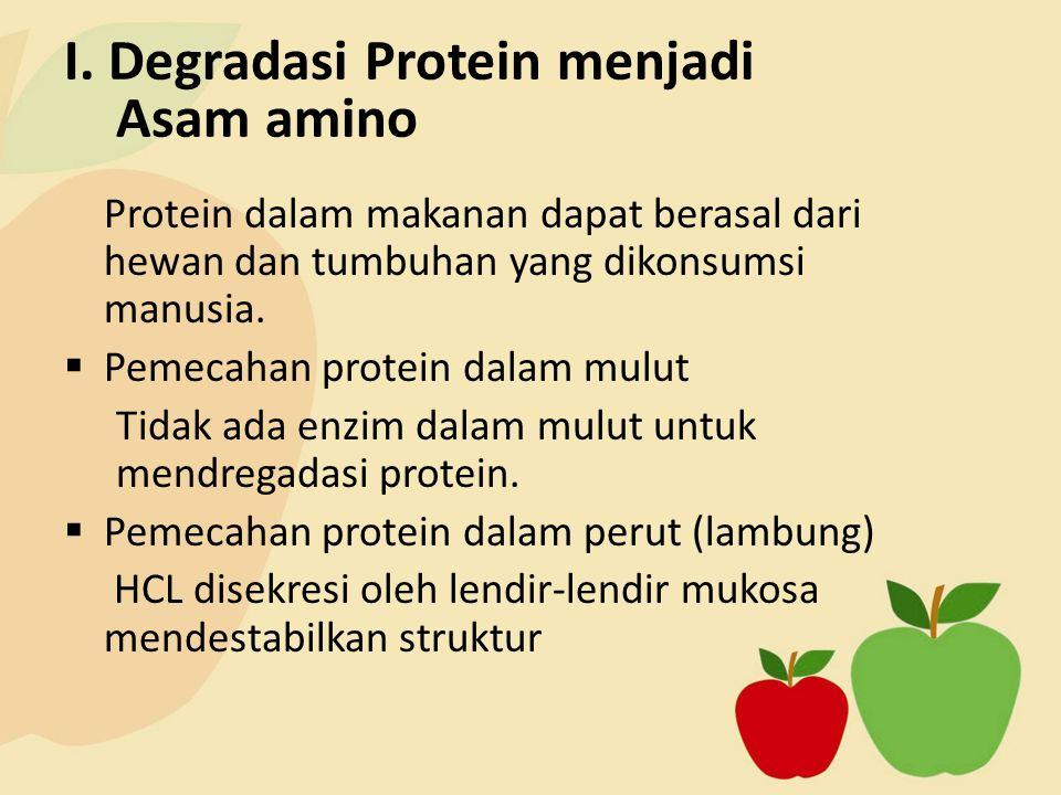I. Degradasi Protein menjadi Asam amino