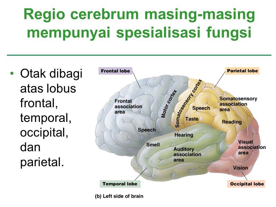 Regio cerebrum masing-masing mempunyai spesialisasi fungsi