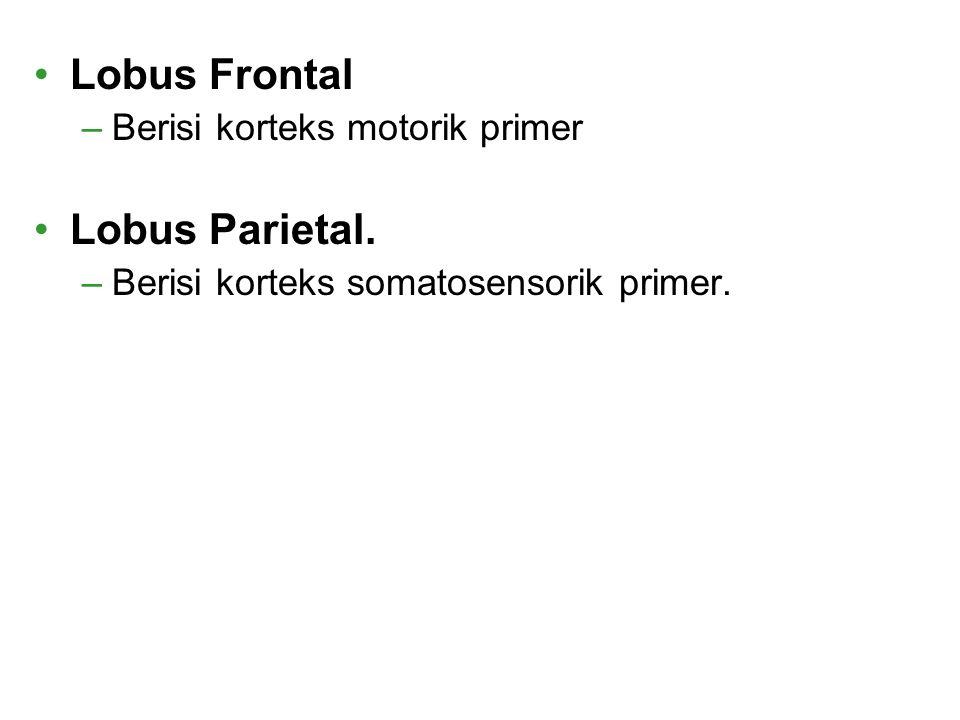 Lobus Frontal Lobus Parietal. Berisi korteks motorik primer
