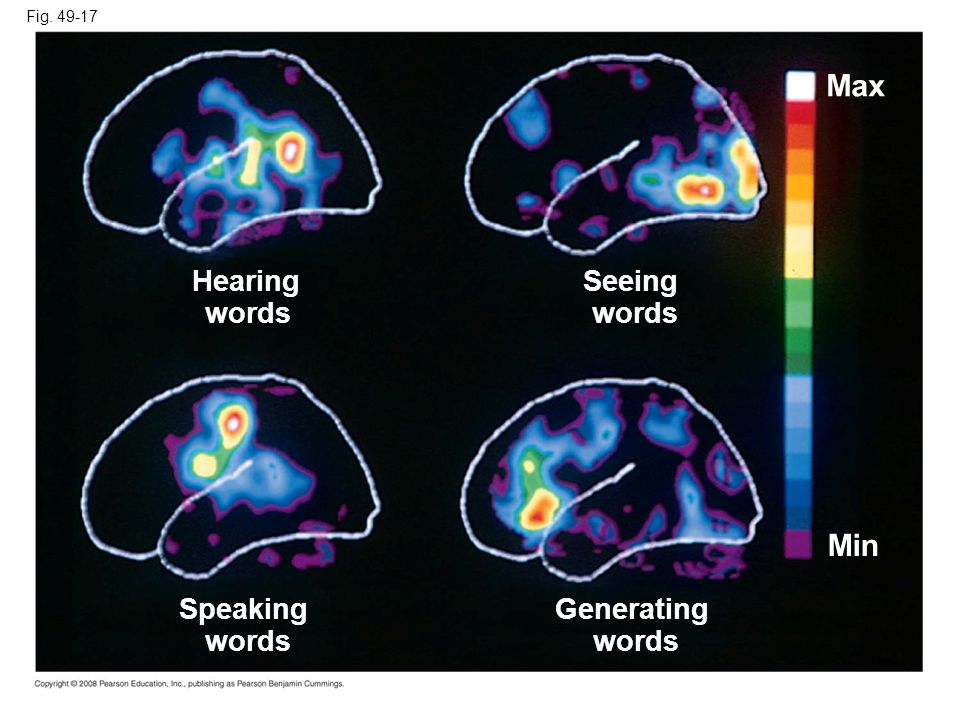 Max Min Hearing Seeing words Speaking words Generating words