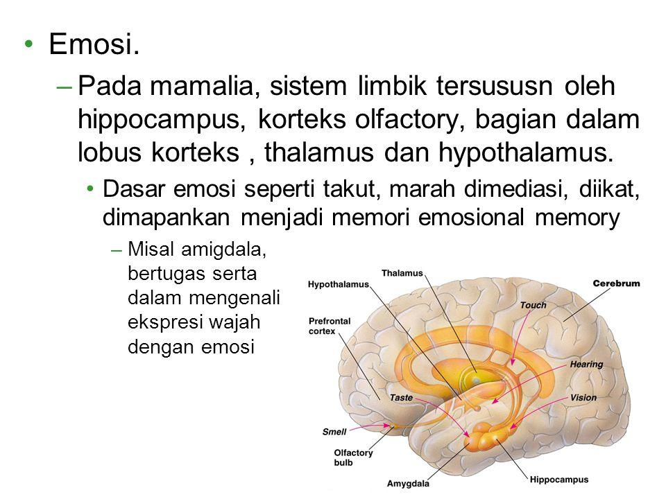 Emosi. Pada mamalia, sistem limbik tersususn oleh hippocampus, korteks olfactory, bagian dalam lobus korteks , thalamus dan hypothalamus.