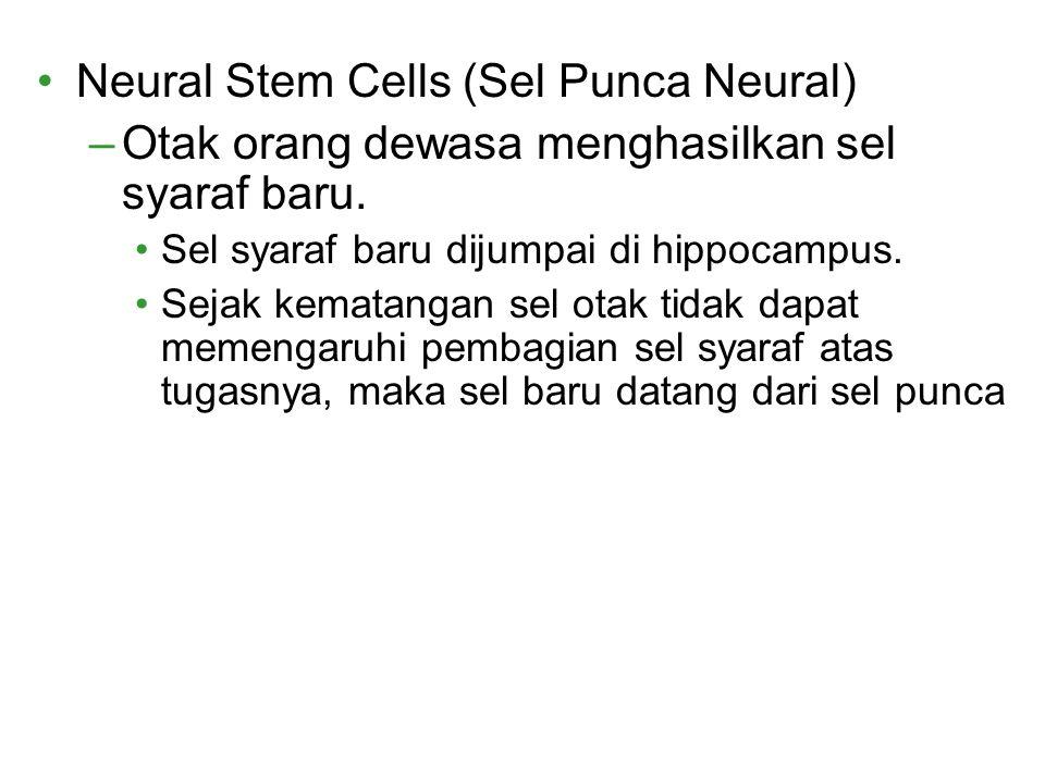 Neural Stem Cells (Sel Punca Neural)