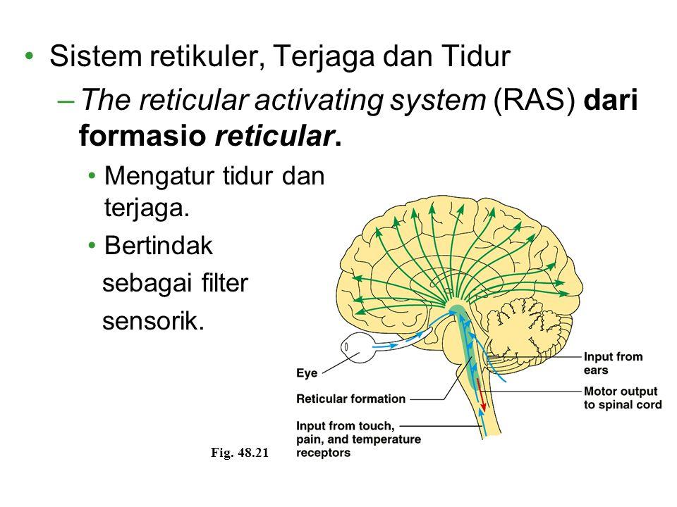 Sistem retikuler, Terjaga dan Tidur