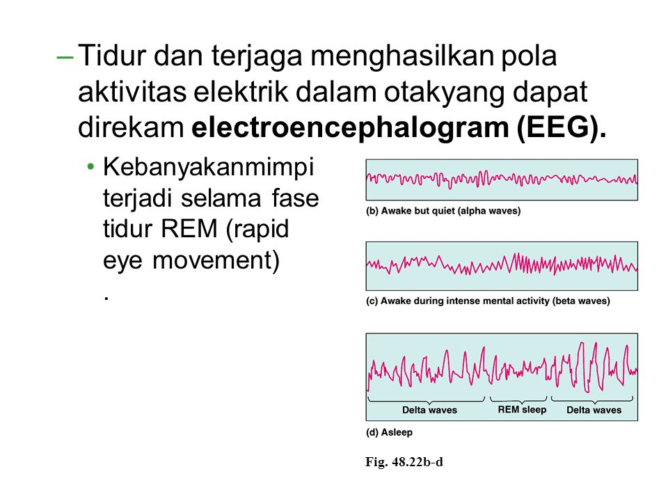 Tidur dan terjaga menghasilkan pola aktivitas elektrik dalam otakyang dapat direkam electroencephalogram (EEG).