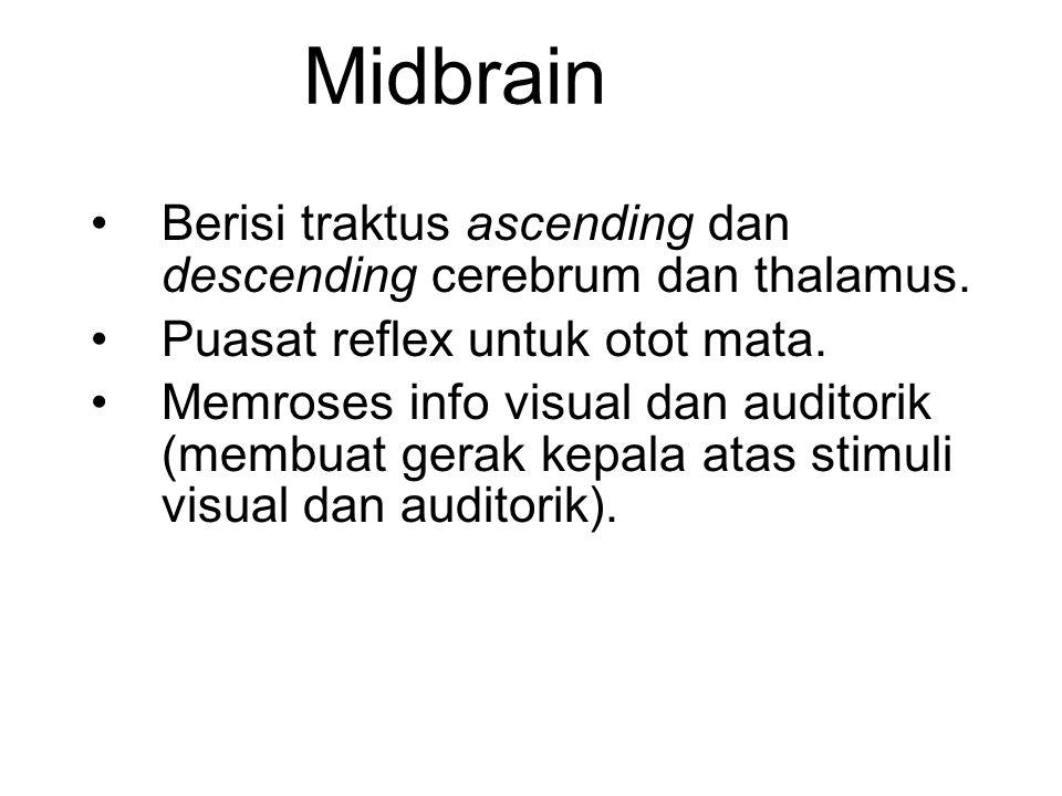 Midbrain Berisi traktus ascending dan descending cerebrum dan thalamus. Puasat reflex untuk otot mata.