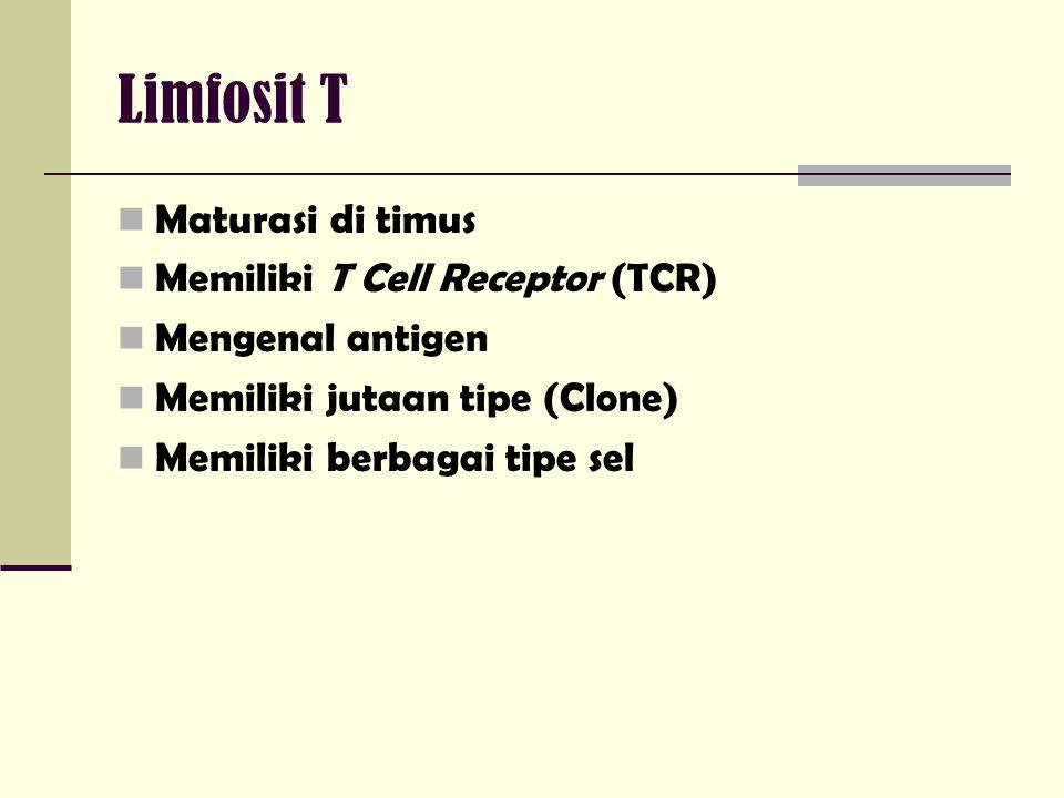 Limfosit T Maturasi di timus Memiliki T Cell Receptor (TCR)