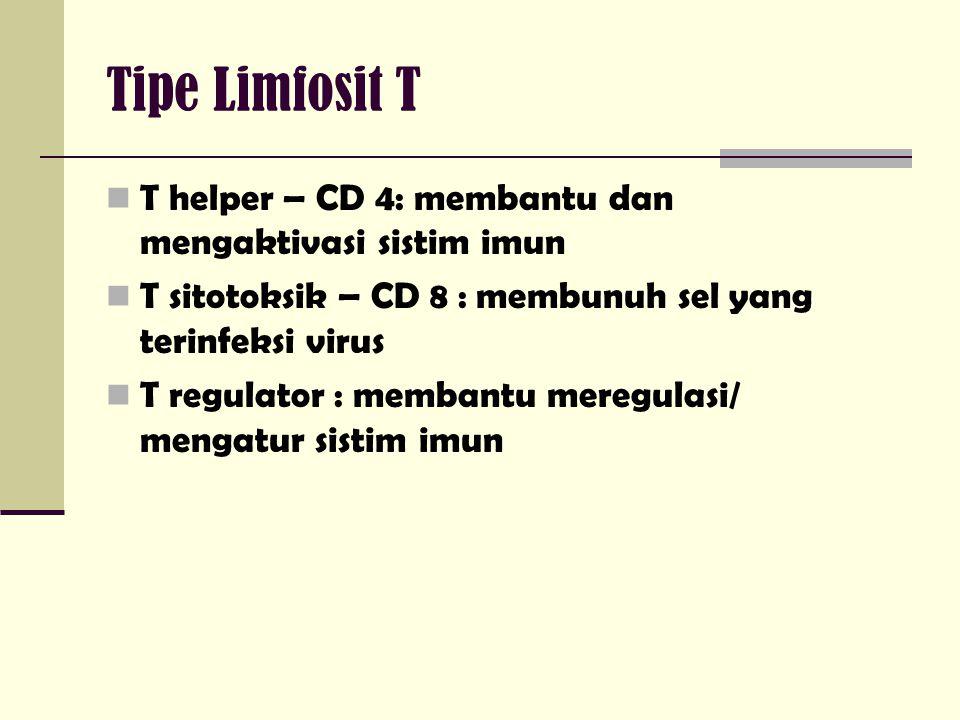 Tipe Limfosit T T helper – CD 4: membantu dan mengaktivasi sistim imun