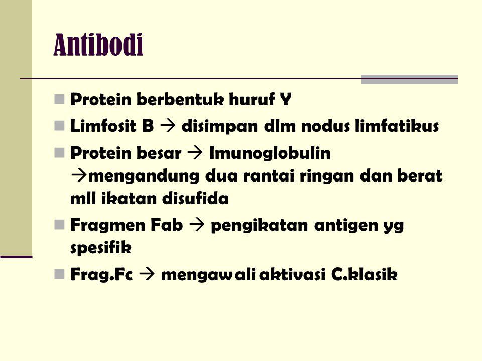 Antibodi Protein berbentuk huruf Y