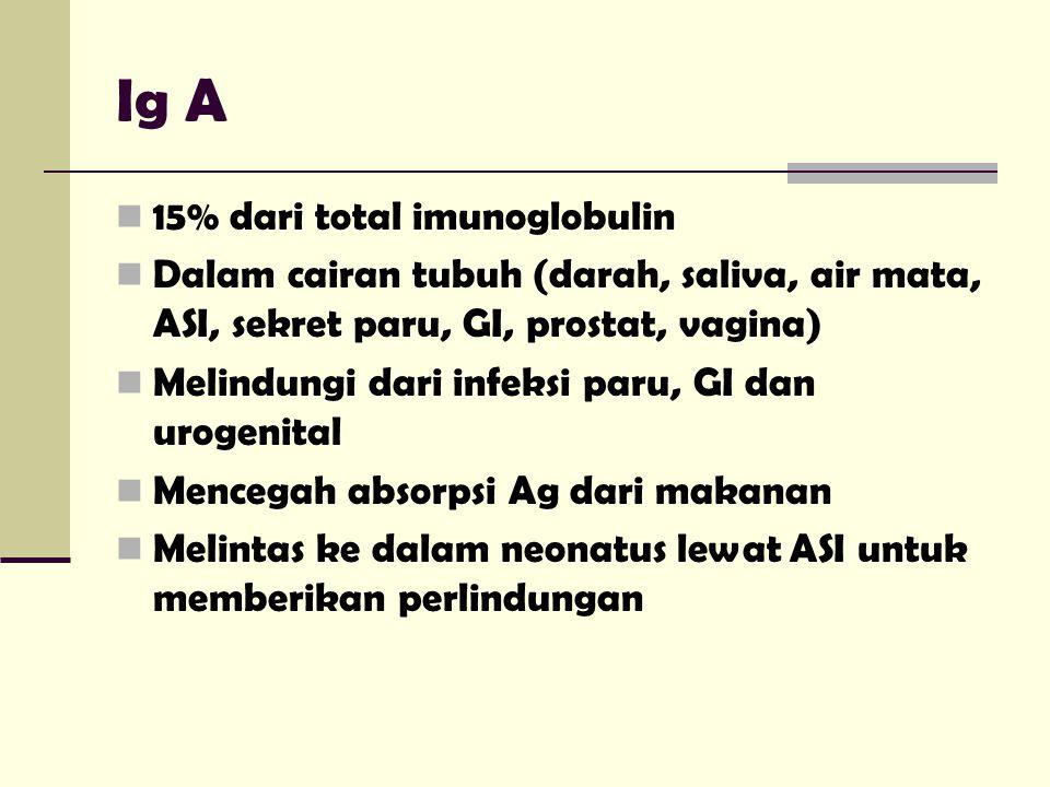 Ig A 15% dari total imunoglobulin