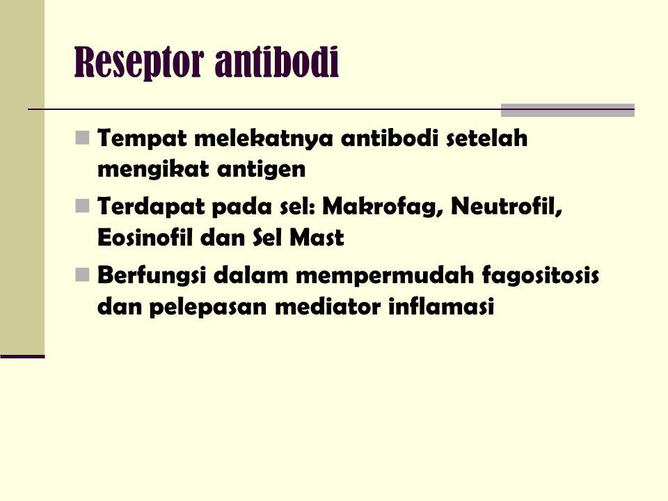 Reseptor antibodi Tempat melekatnya antibodi setelah mengikat antigen