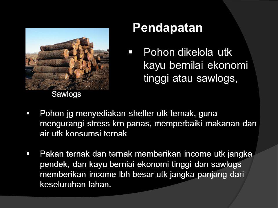 Pendapatan Pohon dikelola utk kayu bernilai ekonomi tinggi atau sawlogs, Sawlogs.