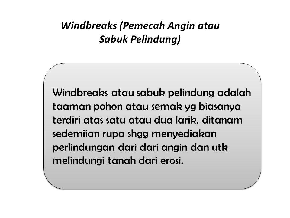 Windbreaks (Pemecah Angin atau Sabuk Pelindung)
