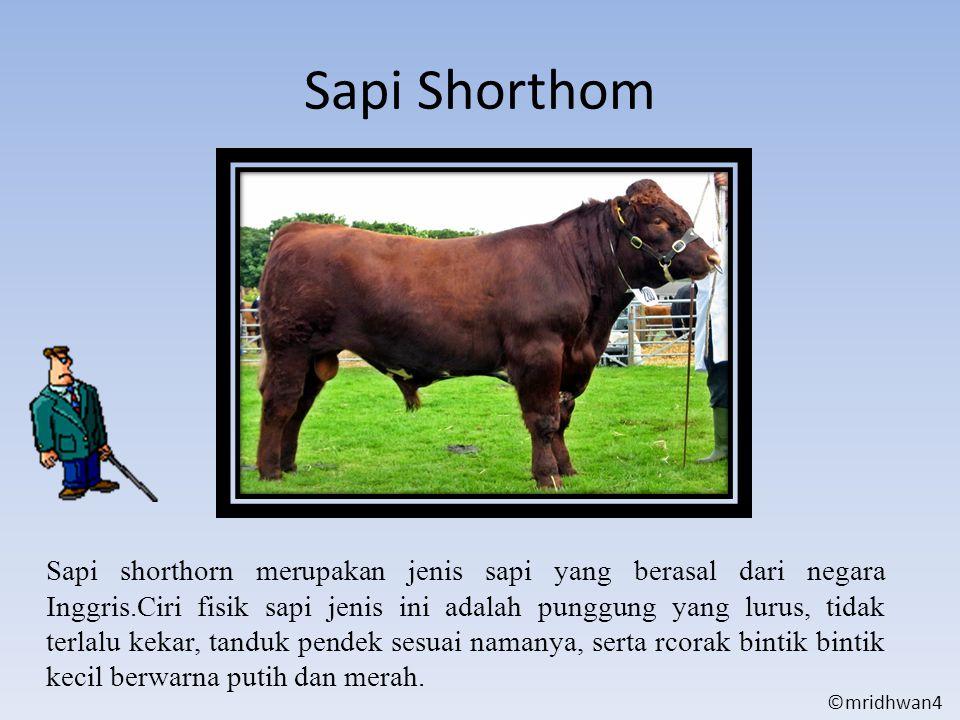 Sapi Shorthom