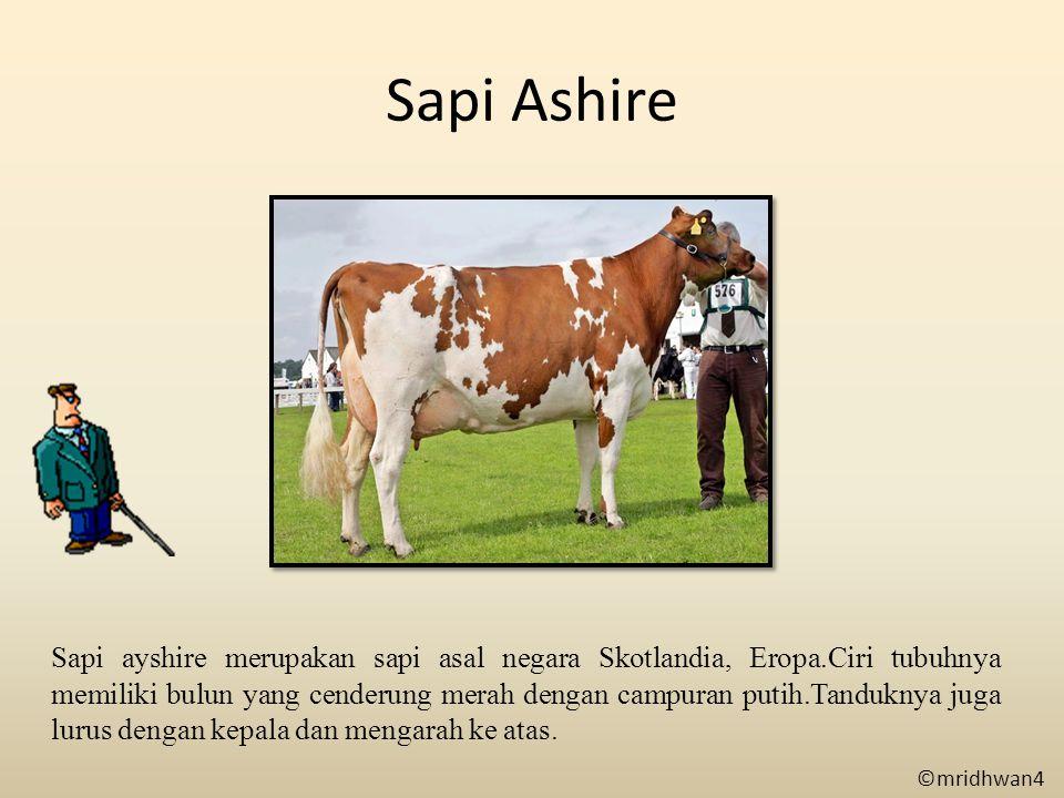 Sapi Ashire
