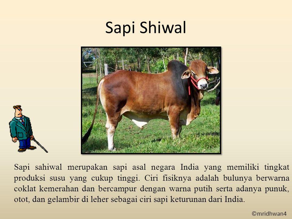 Sapi Shiwal
