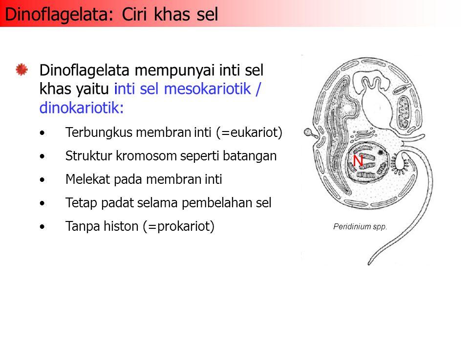 Pyrrophyta, Cryptophyta, Euglenophyta