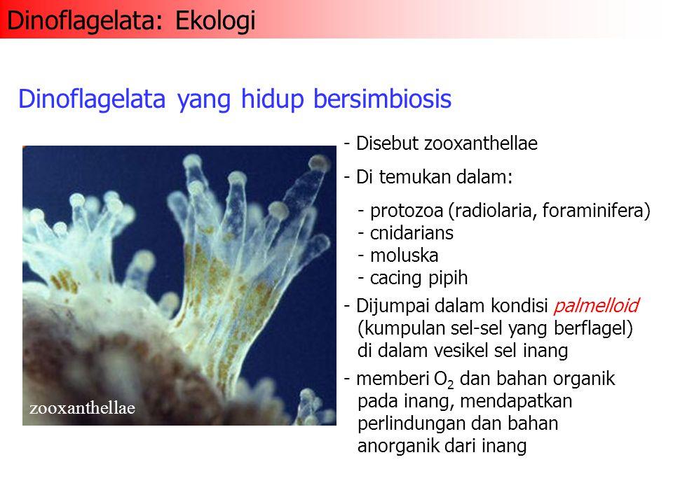 Dinoflagelata: Ekologi