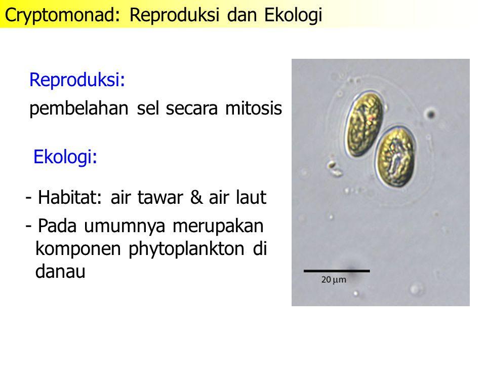 Cryptomonad: Reproduksi dan Ekologi