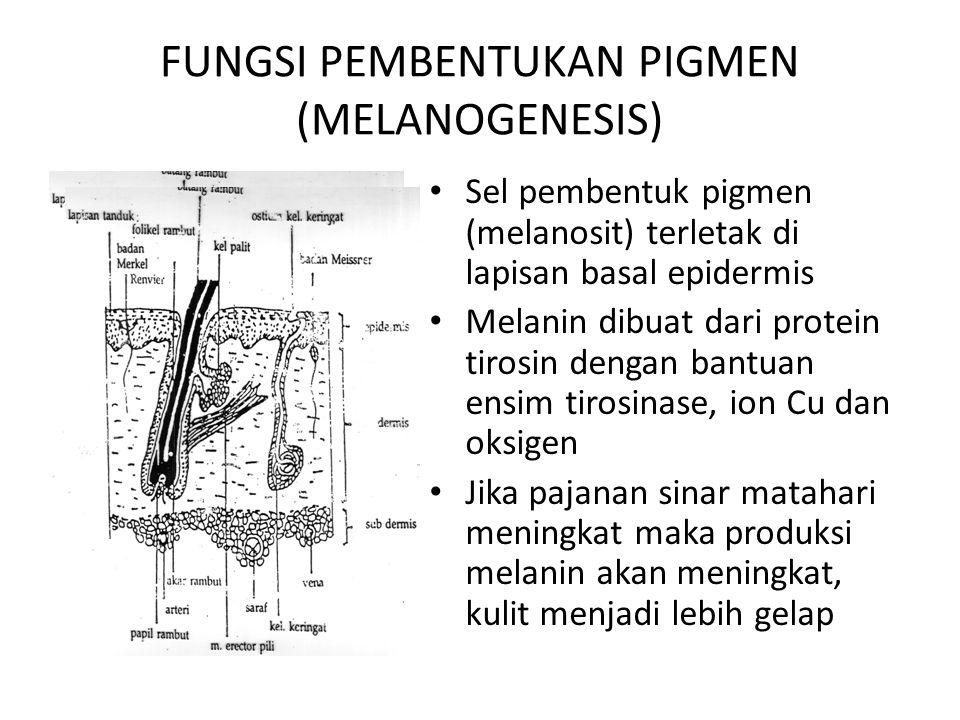 FUNGSI PEMBENTUKAN PIGMEN (MELANOGENESIS)