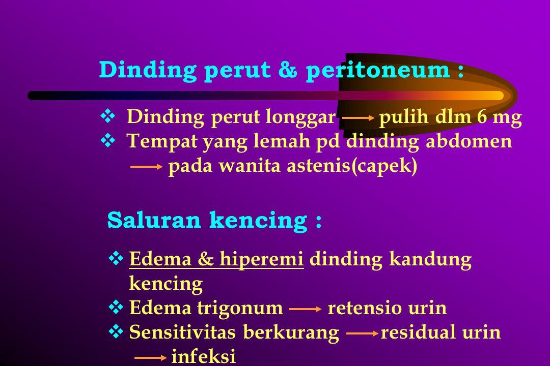 Dinding perut & peritoneum :