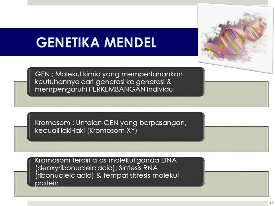 GENETIKA MENDEL GEN ; Molekul kimia yang mempertahankan keutuhannya dari generasi ke generasi & mempengaruhi PERKEMBANGAN individu.