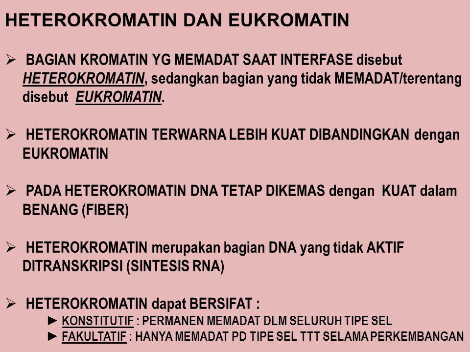 HETEROKROMATIN DAN EUKROMATIN