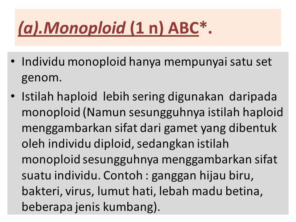 (a).Monoploid (1 n) ABC*. Individu monoploid hanya mempunyai satu set genom.