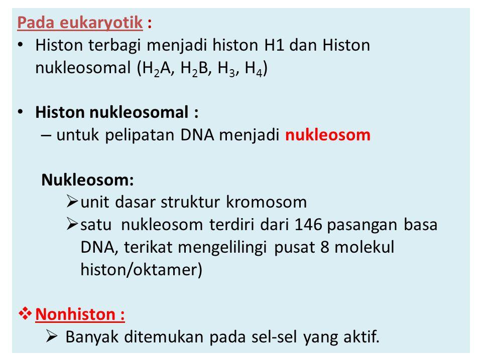 Pada eukaryotik : Histon terbagi menjadi histon H1 dan Histon nukleosomal (H2A, H2B, H3, H4) Histon nukleosomal :