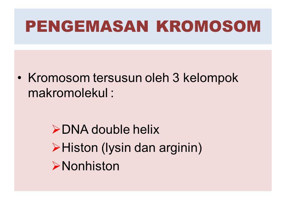 PENGEMASAN KROMOSOM Kromosom tersusun oleh 3 kelompok makromolekul :