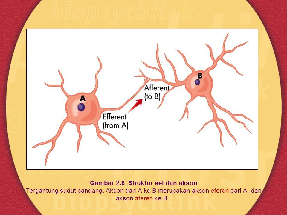 Gambar 2. 8 Struktur sel dan akson Tergantung sudut pandang