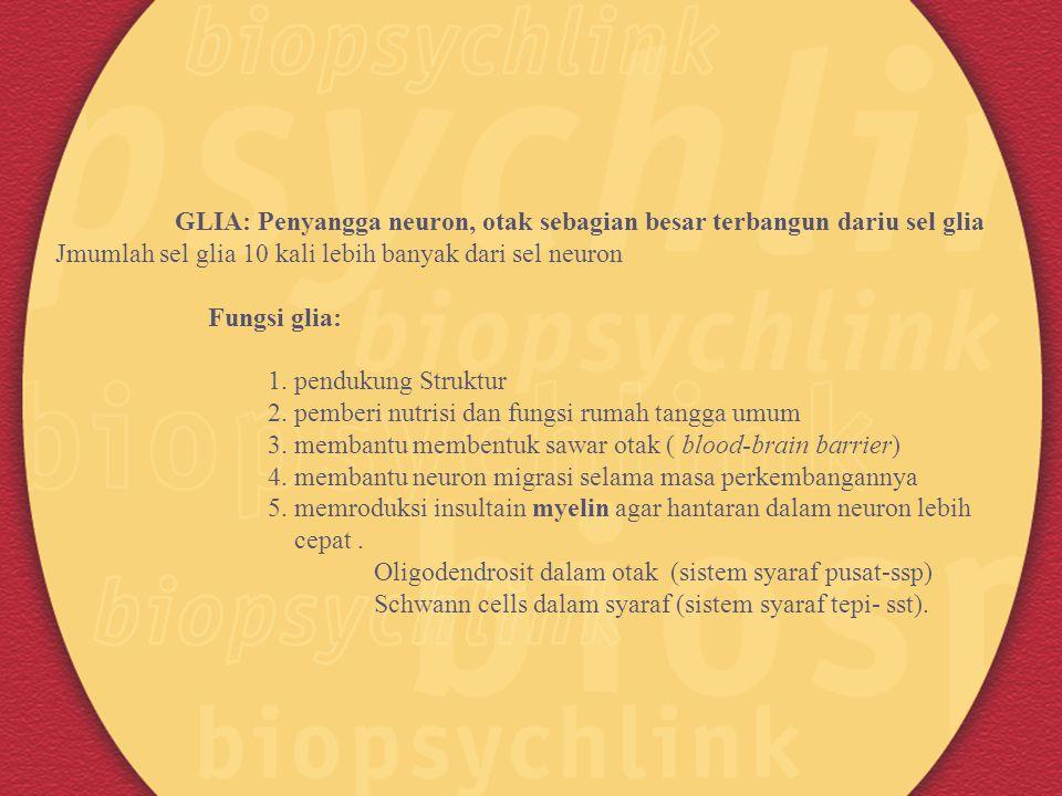 GLIA: Penyangga neuron, otak sebagian besar terbangun dariu sel glia