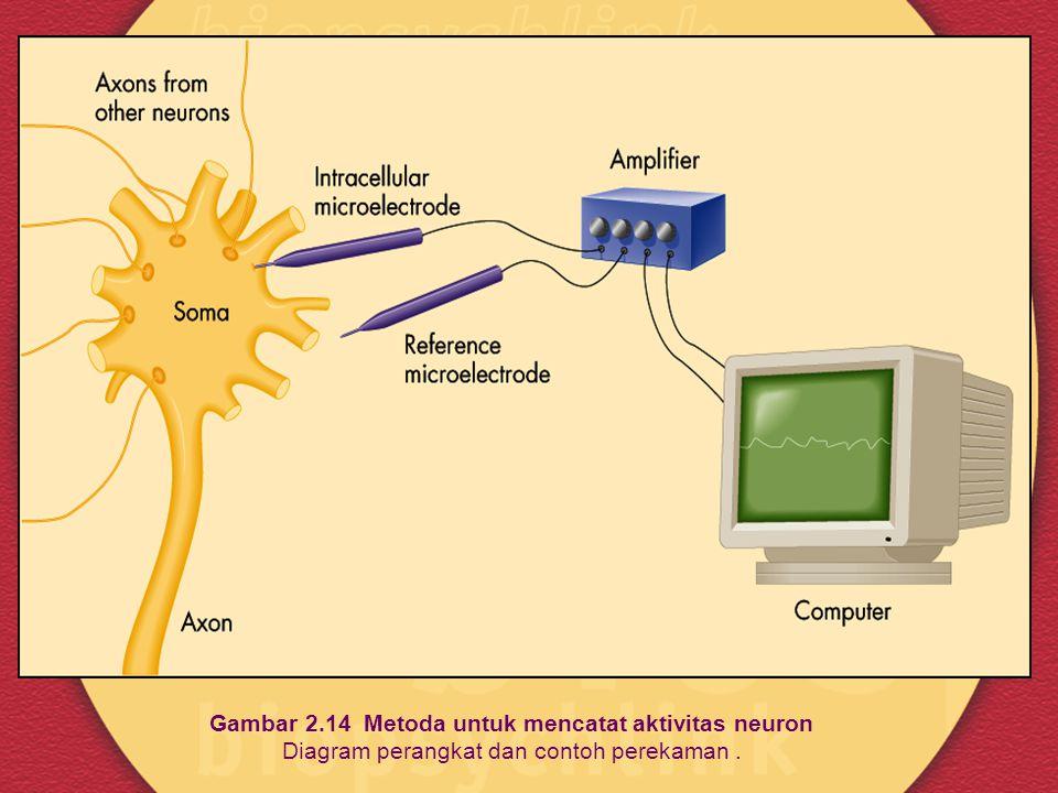 Gambar 2.14 Metoda untuk mencatat aktivitas neuron Diagram perangkat dan contoh perekaman .