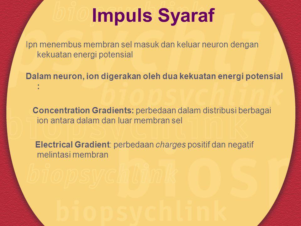 Impuls Syaraf Ipn menembus membran sel masuk dan keluar neuron dengan kekuatan energi potensial.