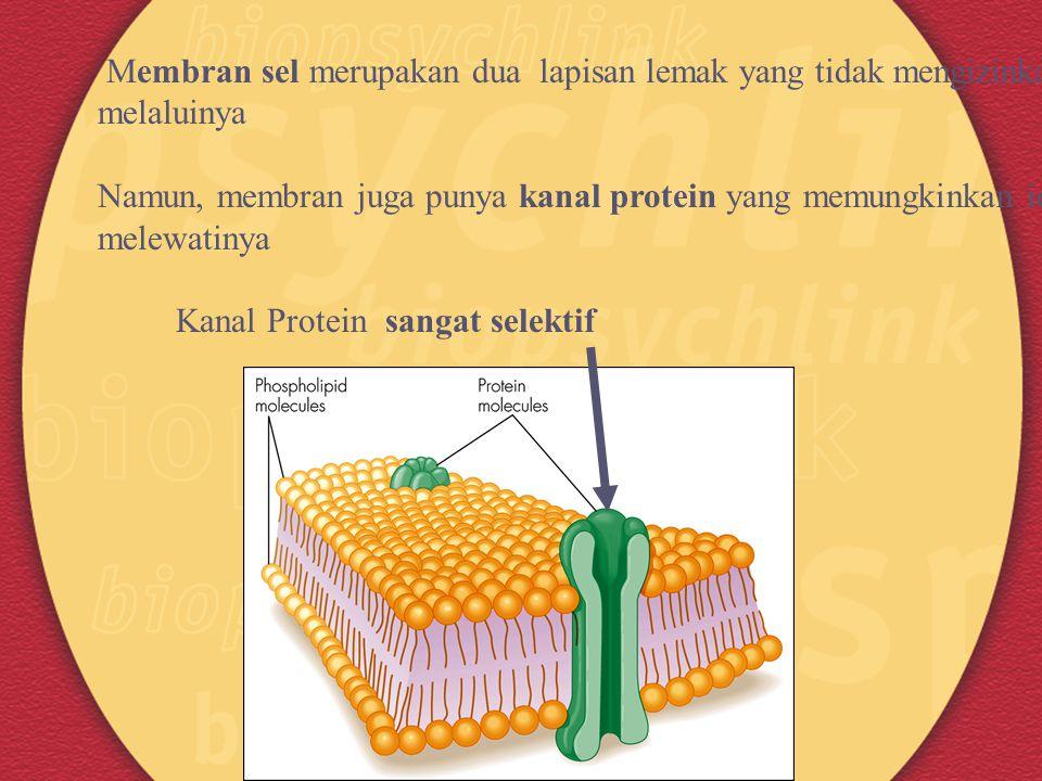 Membran sel merupakan dua lapisan lemak yang tidak mengizinkan ion melaluinya