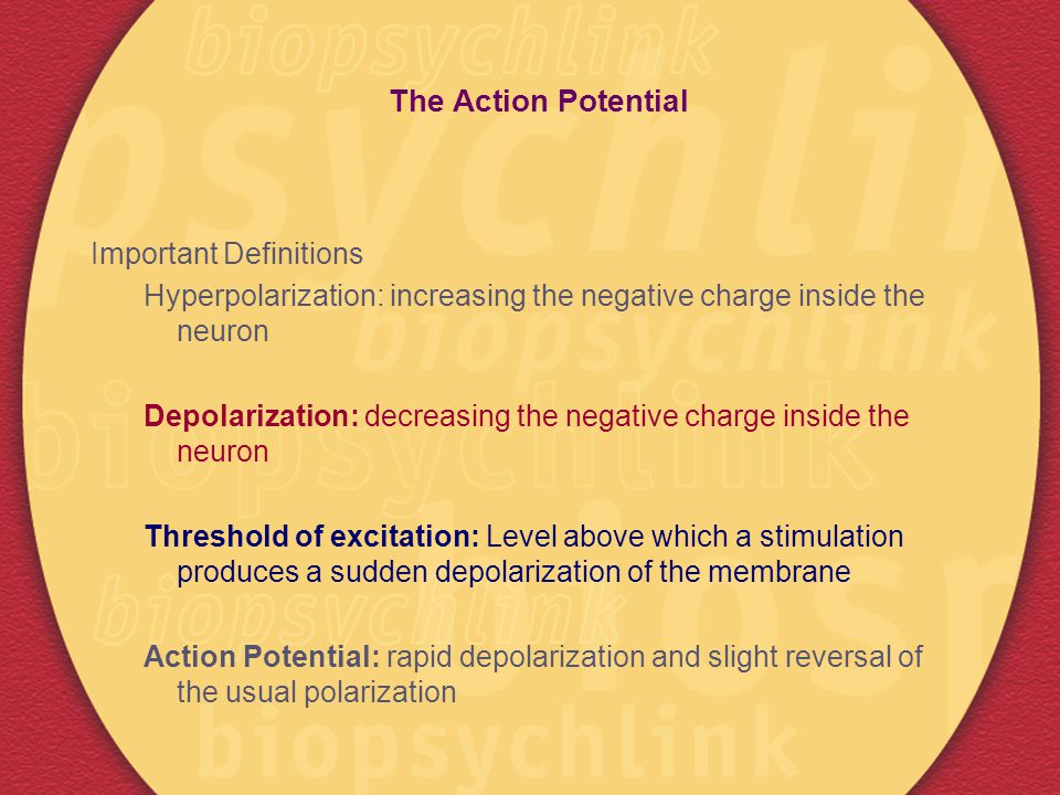 The Action Potential Important Definitions