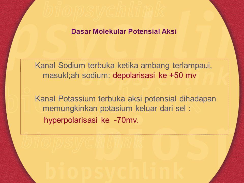 Dasar Molekular Potensial Aksi