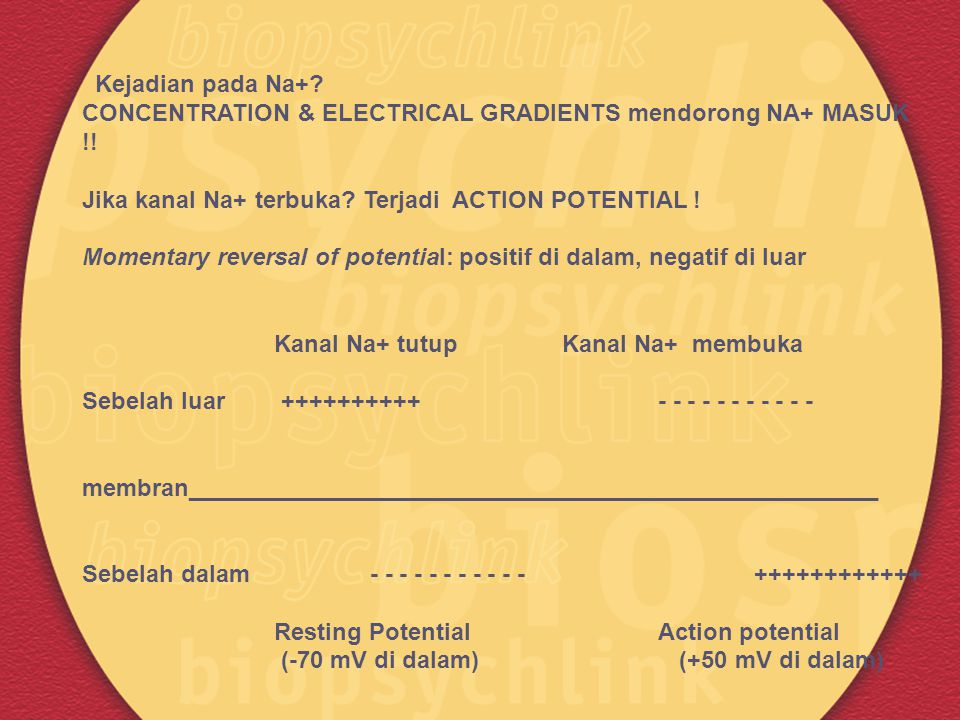 Kejadian pada Na+ CONCENTRATION & ELECTRICAL GRADIENTS mendorong NA+ MASUK !! Jika kanal Na+ terbuka Terjadi ACTION POTENTIAL !