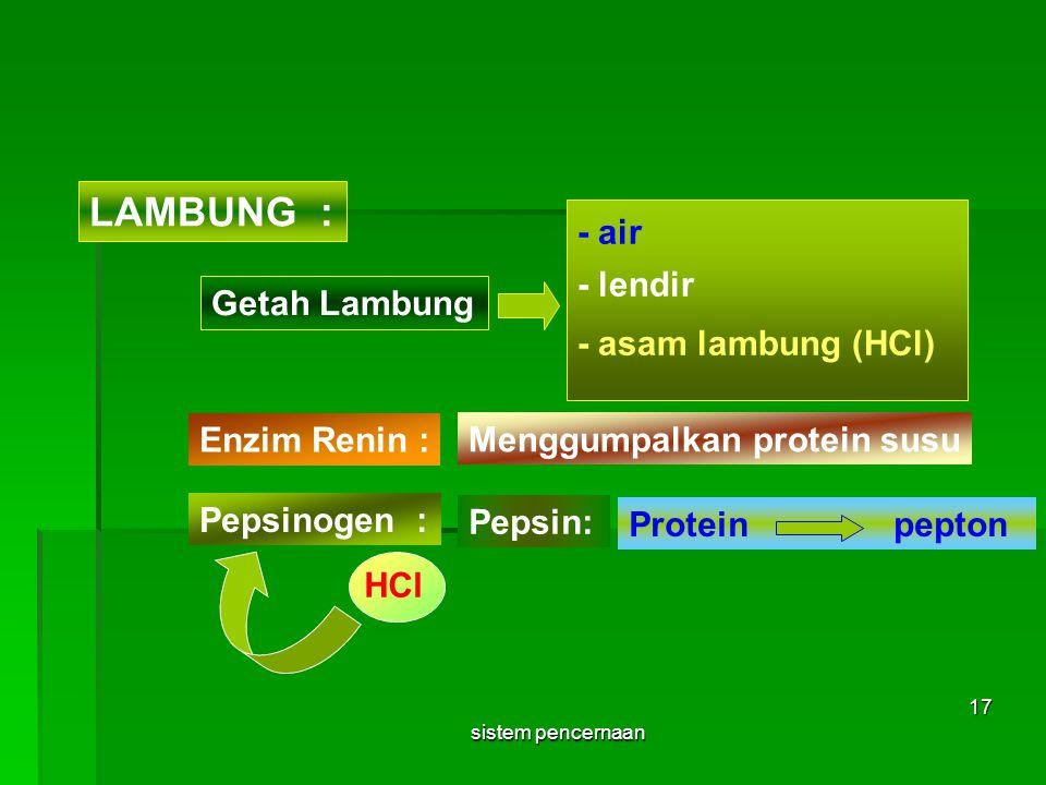 LAMBUNG : - air - lendir Getah Lambung - asam lambung (HCl)
