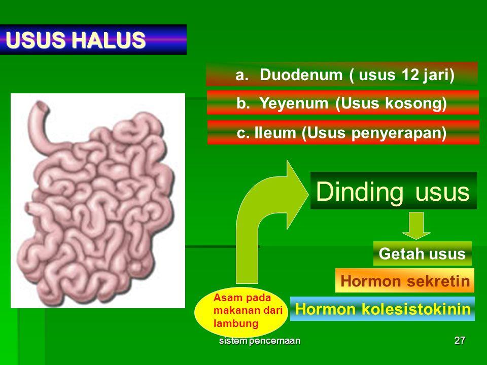 Dinding usus USUS HALUS Duodenum ( usus 12 jari)