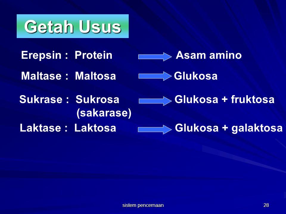 Getah Usus Erepsin : Protein Asam amino