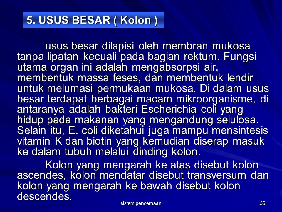5. USUS BESAR ( Kolon )