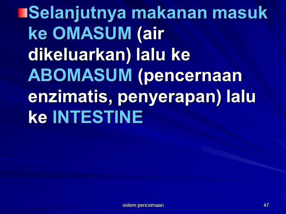 Selanjutnya makanan masuk ke OMASUM (air dikeluarkan) lalu ke ABOMASUM (pencernaan enzimatis, penyerapan) lalu ke INTESTINE