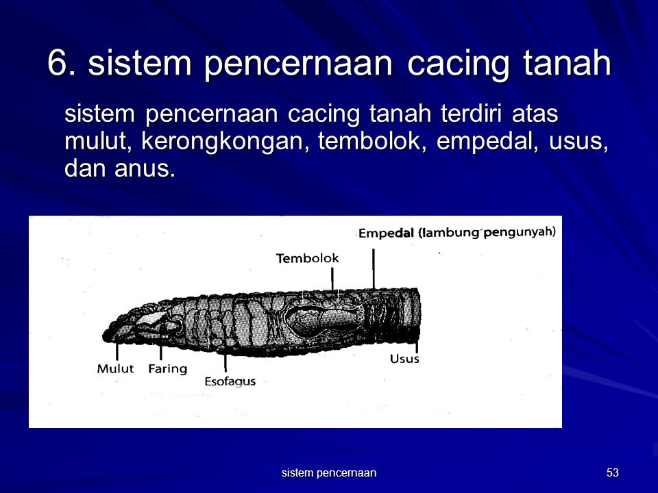 6. sistem pencernaan cacing tanah