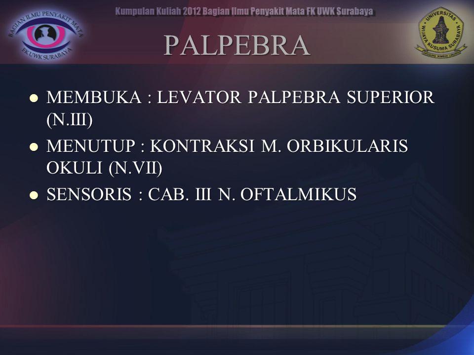 PALPEBRA MEMBUKA : LEVATOR PALPEBRA SUPERIOR (N.III)